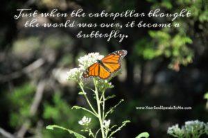 just-when-the-caterpillar-butterfly